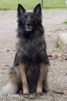 Contactez-nous Club d'éducation canine de SOURZAC (24) Dordogne
