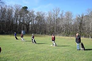 L'Obéissance Club d'éducation canine de SOURZAC (24) Dordogne
