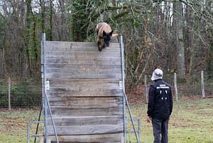 Le Ring Club d'éducation canine de SOURZAC (24) Dordogne