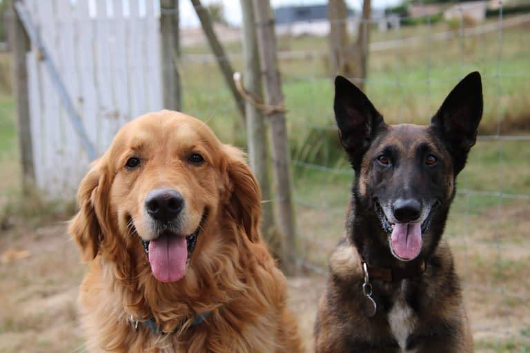 Nos champions ! Club d'éducation canine de SOURZAC (24) Dordogne